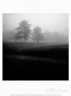 Fog Tree Study II - Posters av Jamie Cook på AllPosters.se