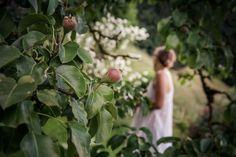 © bysahlia.com Gmunden Austria, Fruit, Garden, Garten, Lawn And Garden, Gardens, Gardening, Outdoor, Yard