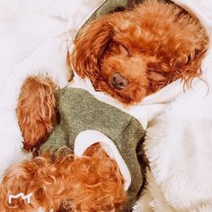 I'll be here if you need me. Brownie is staying cozy in our Lincoln hoodie. . . . #thesharperbarker #yvrdogs  #doghoodie #dogsweater #dogsofvancouver #dogslove #dogsofsydney #dogsofmelbourne #dogsworld #dogsoftheworld #dogsarelife #dogsofnewyork #dogsofchicago #dogsinclothes #dogsofbrisbane #dogsofla #dogsofperth #dogsbeingbasic #dogsofvegas #dogsofseattle Dog Hoodie, Dogs Of The World, Lincoln, Best Dogs, Vancouver, Teddy Bear, Cozy, Hoodies, Animals