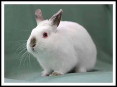Hooray for Pootie! :: #bunny #rabbit #rescue