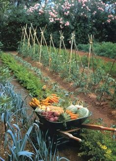 Are you presently dreaming of a new potager kitchen garden? Learn such a potager garden is, the best way to design your home garden with many sample the kitchen potager garden design layout Vegetable Bed, Backyard Vegetable Gardens, Potager Garden, Veg Garden, Vegetable Garden Design, Garden Cottage, Edible Garden, Garden Landscaping, Garden Planters