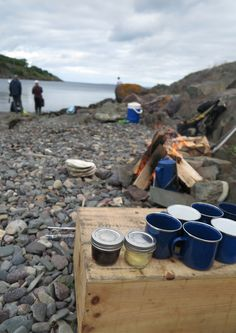 Learning to live off the land: A Newfoundland foraging adventure - Free Candie Best Fish And Chips, Newfoundland And Labrador, Living Off The Land, Edible Plants, Fine Dining, Brewery, Dining Room, Tours, Activities