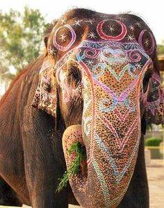 Elephants in Color