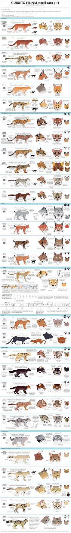 Guide to small #cat http://www.pinterest.com/jamesmarsano/animal-feline/