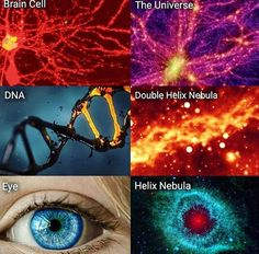 Similarities between Human body and the space 💙💯💯🌅😍☠ Hubble Space Telescope, Space And Astronomy, Nuclear Membrane, Similarities Between, Helix Nebula, Orion Nebula, Andromeda Galaxy, Free Your Mind, Spiritual Disciplines
