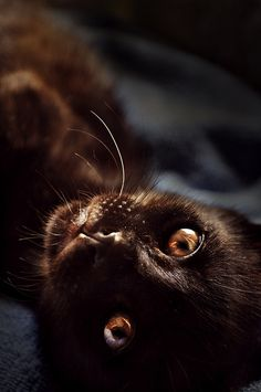 Miu - My little black cat by Taty Iglesias on Flickr.