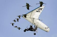 Ultralight Pilots Pilots Guide Whooping Cranes to Their Winter Home in Florida - So Cool!
