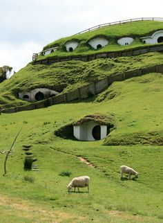 The Lord of the Rings movies are well known all over the world, and so is the village Hobbiton where the Hobbits in the trilogy were living. The beautiful little houses surrounded by amazing nature were located in Matamata in New Zealand during filming, and they still are. Now the Hobbit houses are used by a farm nearby. More precisely their sheep have moved into the village where they are using the hobbit houses. Nowadays you can get a tour around in Hobbiton to see the famous Hobbit cab...