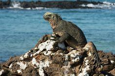 sea-iguana-wallpapers