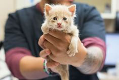 Полосатая кошечка «мать-героиня» взяла под опеку 14 котят « FotoRelax
