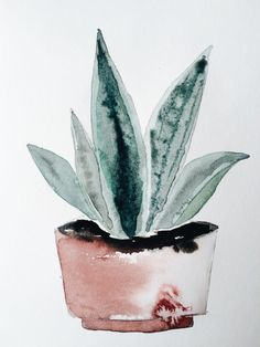 Watercolor potplant. Agave.