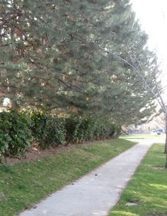 How to Drown Out Street Noise & Traffic with Landscaping --- Wonder how hard it would be to do this. Garden Inspiration, Garden Ideas, Drown, Noise Reduction, Fixer Upper, Landscaping, Sidewalk, New Homes