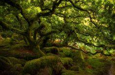 A travers le monde, il existe une multitude de forêtstoutes plus sublimes et mystérieuses les unes que les autres. Certaines marquent les esprits par leurs couleurs, quand d'autres le font grâce à leurs arbres aux formes incongrues, leur taille oul'atmo...