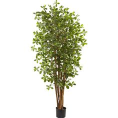 Found it at Wayfair - Olive Silk Tree in Pot $225