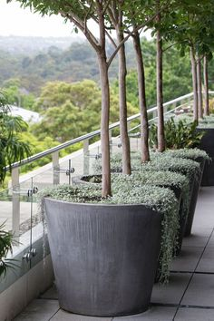– 47 Der beliebteste und schönste Dachgarten, # the roof garden # very beautiful Tree Planters, Outdoor Planters, Garden Planters, Outdoor Gardens, Potted Trees Patio, Trees In Pots, Rooftop Gardens, Big Planters, Large Garden Pots