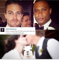Colton Haynes is the awkward photo bombing llama. #Arrow