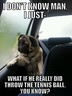 Introspective Pug - Imgur...My sister showed me this a couple minutes ago and I'm still dying
