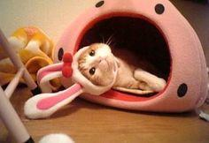 Easter Cat  ❤