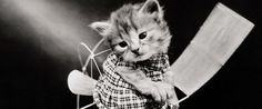 Adorable Cat Photos From 1915 Will Make Your Heart Explode Into Tiny Pieces
