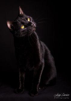 Black Cat - A beautiful black cat expression