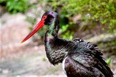 Sagres Birdwatching Festival 2021 | Travel Begins at 40 Mass Migration, Migratory Birds, Parc National, Bird Watching, Marine Life, Botany, Animals Beautiful, Wildlife, Stork