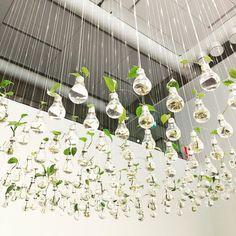 Upea Vihreä maa kukkiva kaupunki näyttely Sinkassa Keravalla. Iso peukku! Maria - Airam yksi vaikuttavimmista töistä. #sinkka #vihreämaakukkivakaupunki #futuremarja #kerava #keravantaidemuseo #kultaköynnös #hehkulamppu