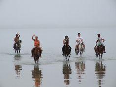 Horse in Beach