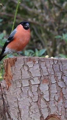 Funny Animal Videos, Animal Memes, Funny Animals, Beautiful Gif, Beautiful Birds, Nature Story, Happy Birthday Video, Bird Gif, Animal Species