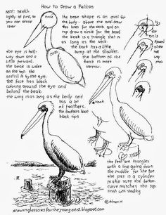 How to Draw Worksheets for The Young Artist: How To Draw A Pelican on a pier Worksheet. How to Draw Worksheets for The Young Artist: How To Draw A Pelican on a pier Worksheet. Bird Drawings, Colorful Drawings, Easy Drawings, Animal Drawings, Drawing Sketches, Sketching, Horse Drawings, Drawing Lessons, Drawing Techniques