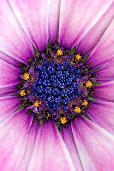 Insides of a Flower