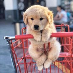 7 Womens Health Topics We Need To Talk About In 2020 Super Cute Puppies, Baby Animals Super Cute, Cute Baby Dogs, Cute Little Puppies, Cute Dogs And Puppies, Cute Little Animals, Cute Funny Animals, Doggies, Dogs In Love