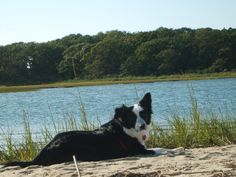Betty C. and her beautiful Border Collie from Plainview, NY. This pup loves to chew on snack sticks while they watch Must Love Dogs.