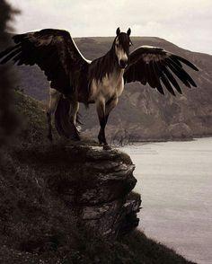 Beautiful fantasy horse.