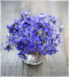 like this color and the flowers Lavender Blue, Periwinkle Blue, Love Blue, Purple, Love Flowers, Beautiful Flowers, Wedding Flowers, Delphinium, Embroidered Flowers
