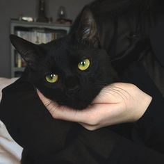 black cat with beautiful green eyes Crazy Cat Lady, Crazy Cats, I Love Cats, Cute Cats, Adorable Kittens, Cute Black Cats, Animals And Pets, Cute Animals, Photo Chat