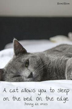A cat allows you to sleep on the bed. On the edge. Quote by Jenny de Vries.