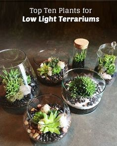 Love terrariums but don't have the light? Here are our top 10 plants for low light terrariums! http://pistilsnursery.com/low-light-terrarium-plants/ More