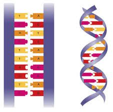 How to Explain DNA to Kids | Double helix, DNA and Genetics