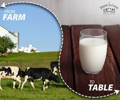 Pride of Cows farm fresh milk delivered to your table.