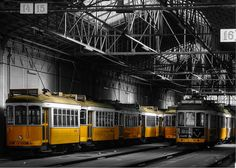 Electric Yellow by PhotodoSantos
