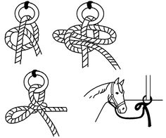 Quick Release Knot illustration  #Horsemastership #glenlyon pony club.