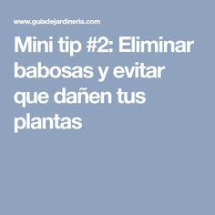 Mini tip #2: Eliminar babosas y evitar que dañen tus plantas