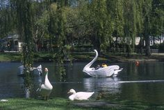 Toronto's Top 10 : Toronto Islands - Centreville Amusement Park This small amusement park on Centre Island has more than 30 rides, including swan boats and a colorful carousel. Centre Island, Toronto Island, Amusement Park, Childhood Memories, Ontario, Cool Photos, Places To Go, Canada, Carousel