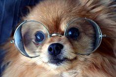 Steampunk puppy