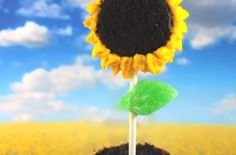 No-Bake Sunflower Cookie Pops /  This is a fun foodie project to involve the kids. #kidfriendly