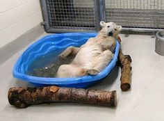 11 month polar bear