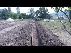 Как правильно сажать малину осенью и весной, чтобы получить хороший урожай