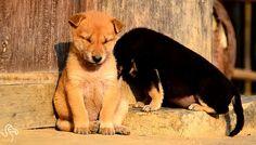 Pets falling asleep. #pets #animals #sleep