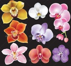Orchid types are classified according to their physical traits that include color of the flowers, shape of the leaves, height of the stem, and their mode of growth. Read the article to know the most common types of orchids. Types Of Orchids, Blue Orchids, Orchid Types, Orchid Plants, Orchid Flowers, Indoor Orchids, Orchids Garden, Flowers Garden, Orchid Drawing