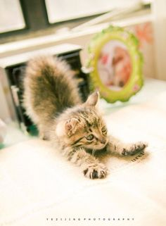 Source: lovemeow.com - http://lovemeow.com/2012/06/small-sweet-clingy-and-super-cute/